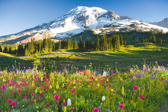 usa-washington-mt-rainier-national-park-wildflowers-and-hiker-rene-frederick
